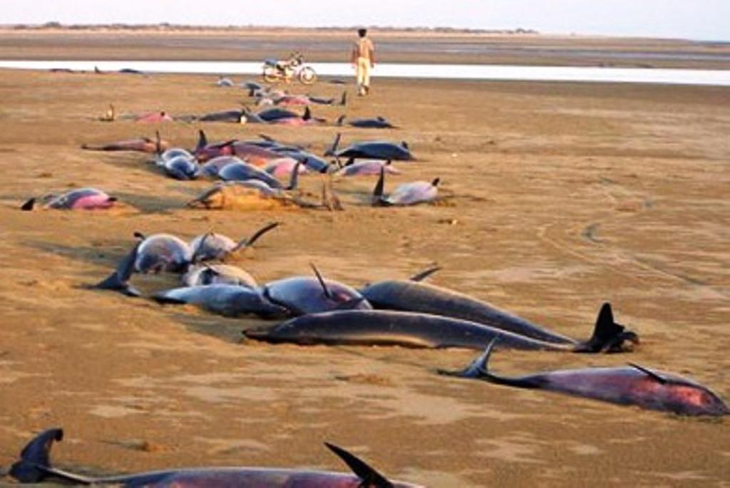 nekra-delfinia-kolpos-mexikou