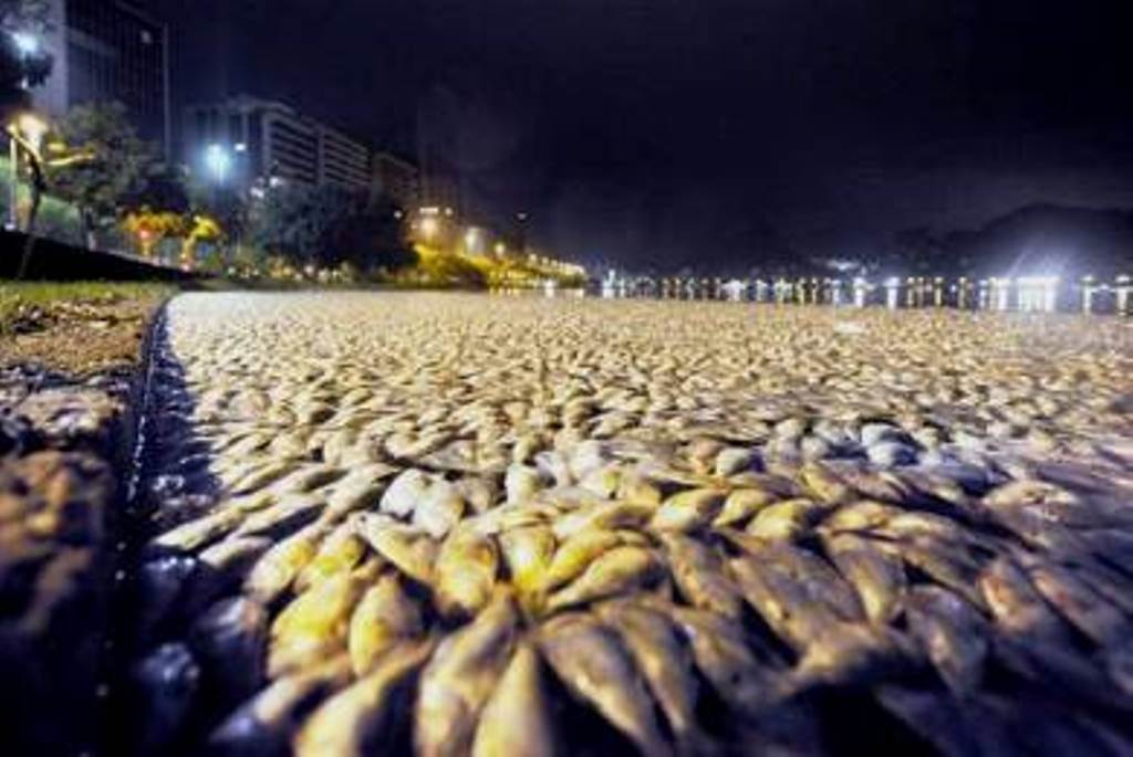thousands-dead-fishes-brasil