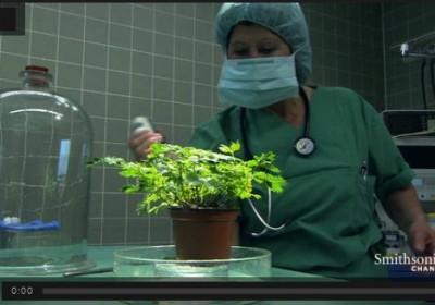 Ανταποκρίνονται τα φυτά στον πόνο;